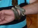 Reptilienschau 2012 7
